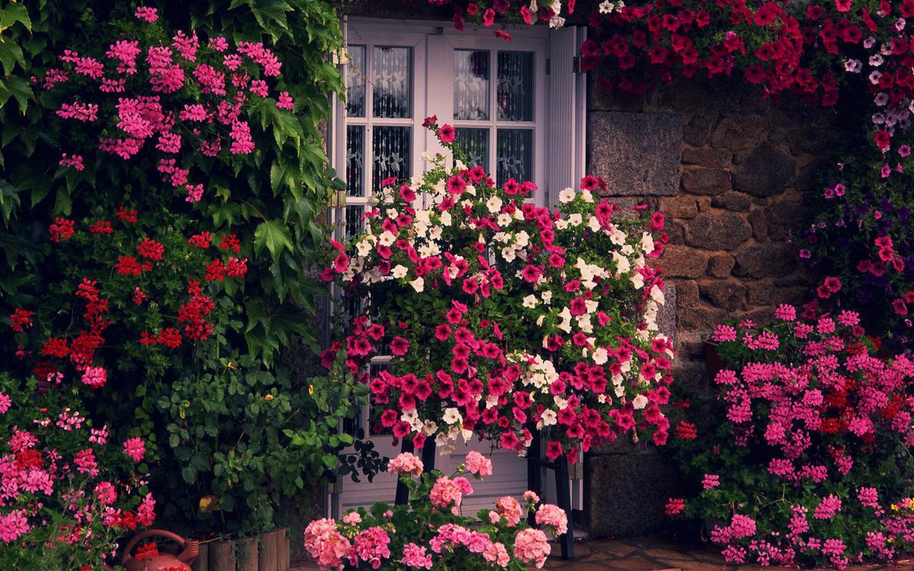 49537 скачать обои Растения - заставки и картинки бесплатно
