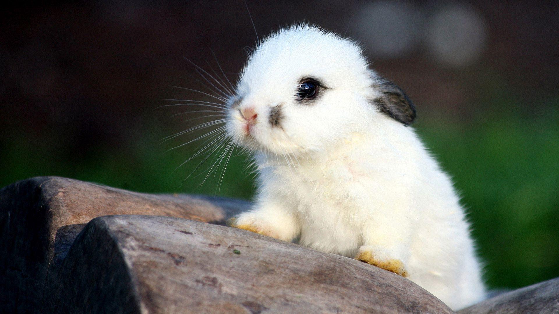 67915 Hintergrundbild herunterladen Kaninchen, Tiere, Gefleckt, Fleckig, Nett, Schatz - Bildschirmschoner und Bilder kostenlos