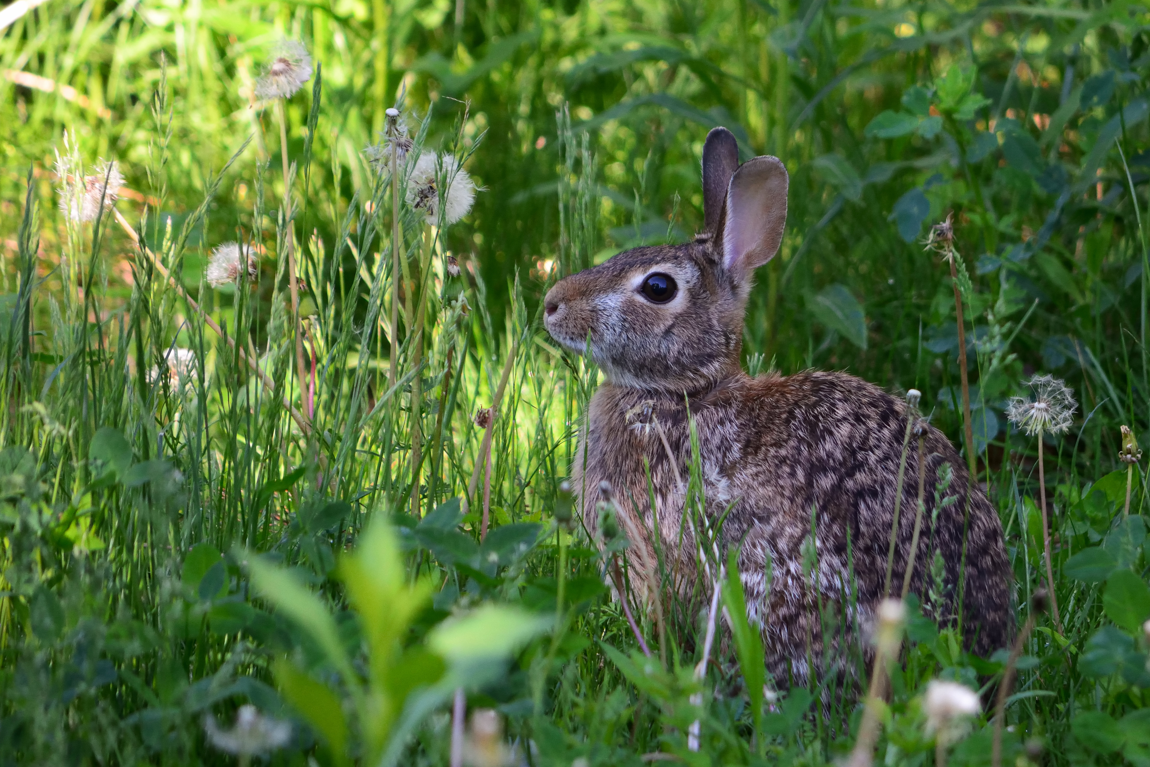 156872 download wallpaper Animals, Rabbit, Animal, Fluffy, Grass screensavers and pictures for free