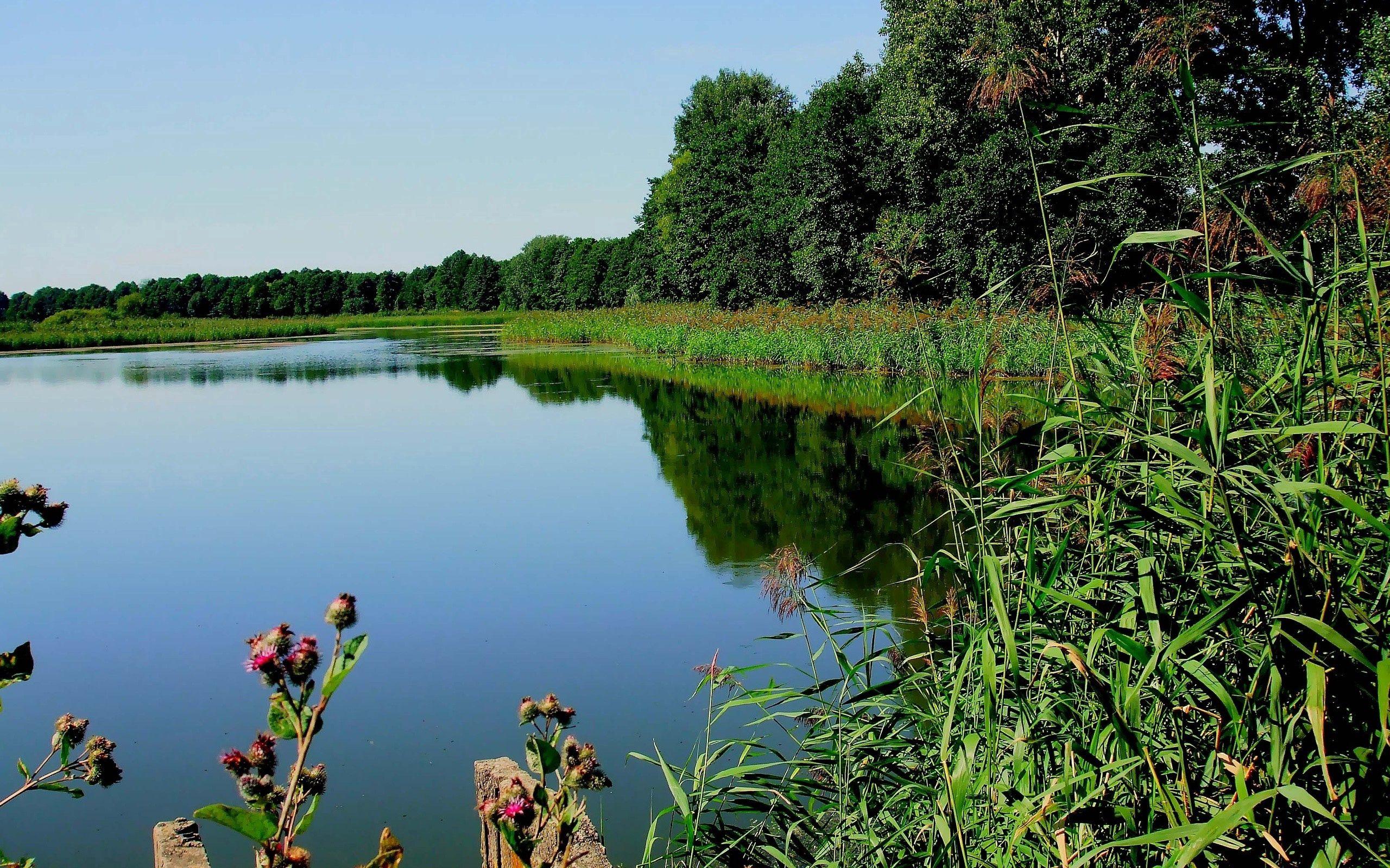 69449 скачать обои Река, Природа, Деревья, Трава, Растение - заставки и картинки бесплатно