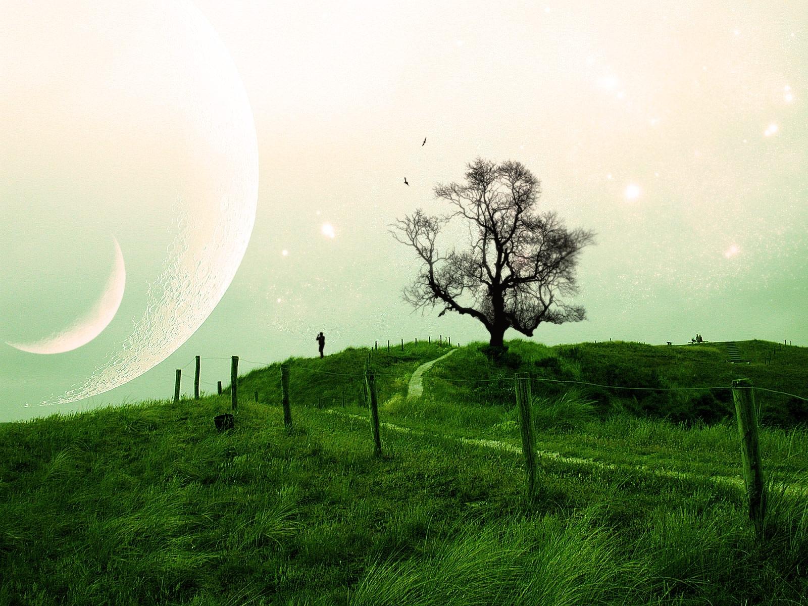 7172 скачать обои Пейзаж, Деревья, Трава - заставки и картинки бесплатно