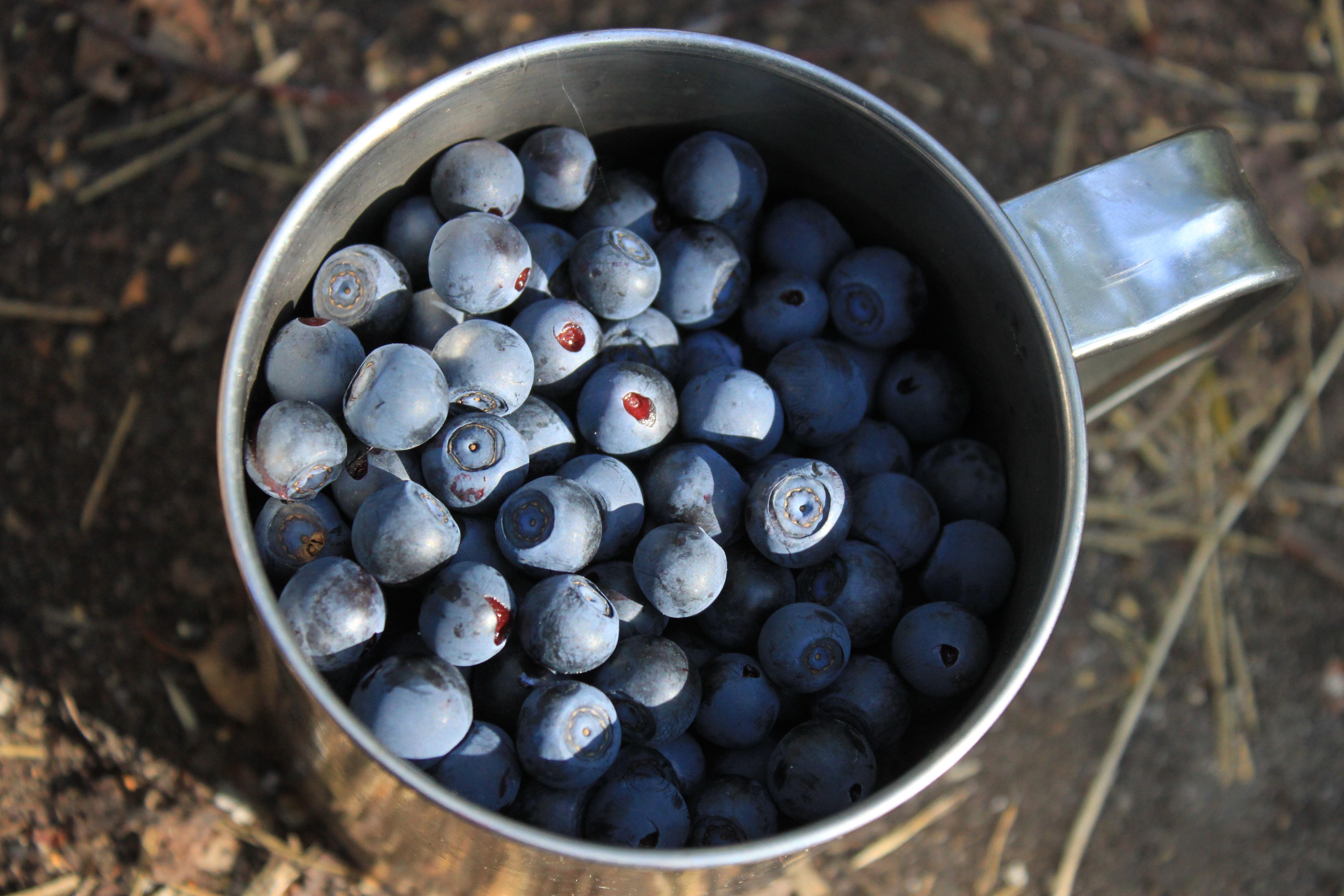 55405 Hintergrundbild herunterladen Lebensmittel, Blaubeeren, Berries, Eine Tasse, Tasse - Bildschirmschoner und Bilder kostenlos
