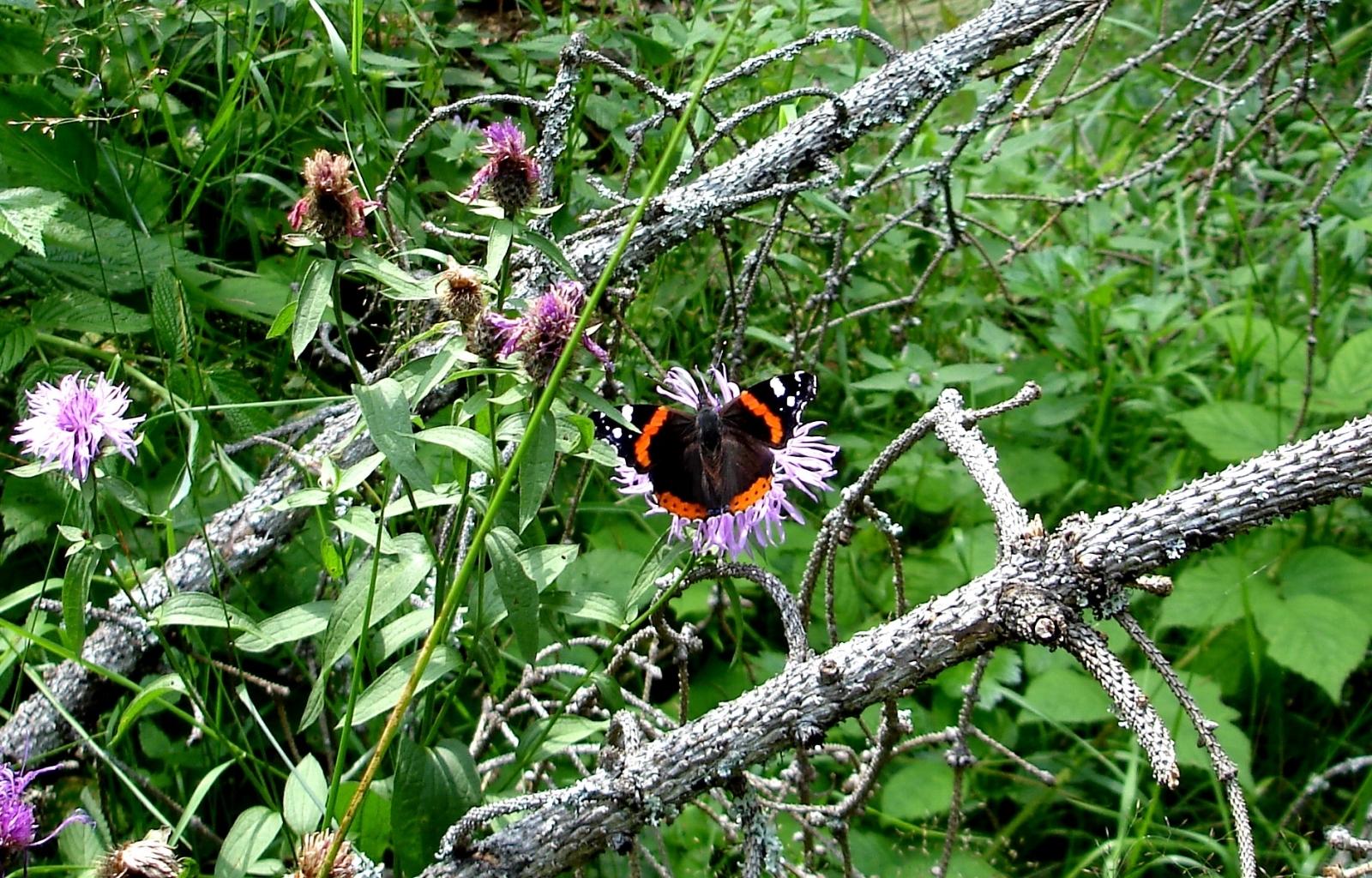 Скачать картинку Растения, Бабочки, Цветы, Насекомые в телефон бесплатно.