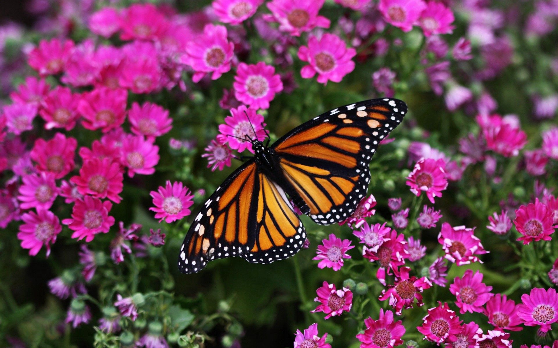 144411 download wallpaper Macro, Butterfly, Plant, Flowers screensavers and pictures for free