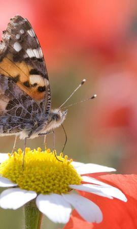 34405 Salvapantallas y fondos de pantalla Insectos en tu teléfono. Descarga imágenes de Mariposas, Insectos gratis
