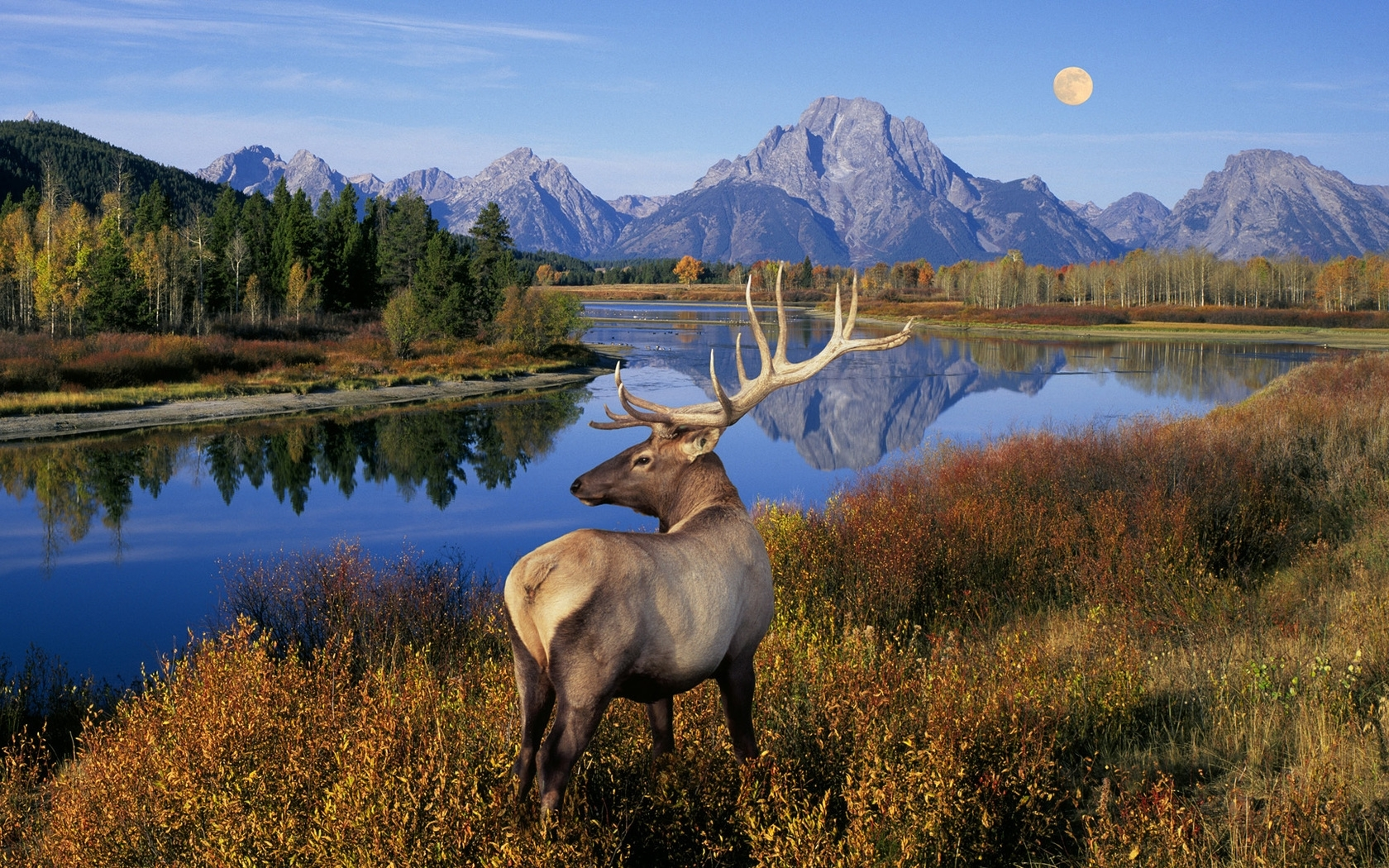 43635 download wallpaper Animals, Nature, Landscape, Deers screensavers and pictures for free