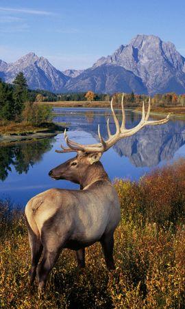 43635 завантажити шпалери Тварини, Пейзаж, Природа, Олені - заставки і картинки безкоштовно