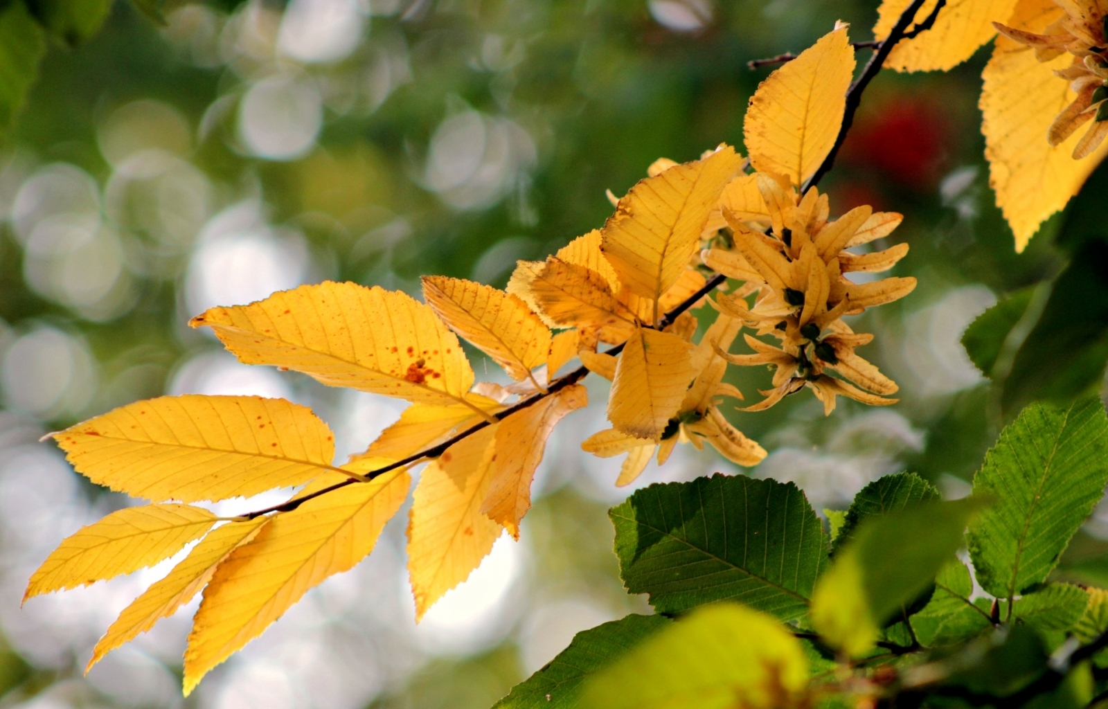 27559 download wallpaper Plants, Autumn, Leaves screensavers and pictures for free