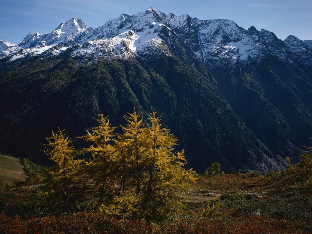 33460 download wallpaper Landscape, Trees, Mountains screensavers and pictures for free