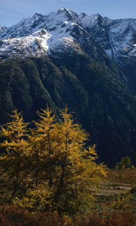 33460 скачать обои Пейзаж, Деревья, Горы - заставки и картинки бесплатно