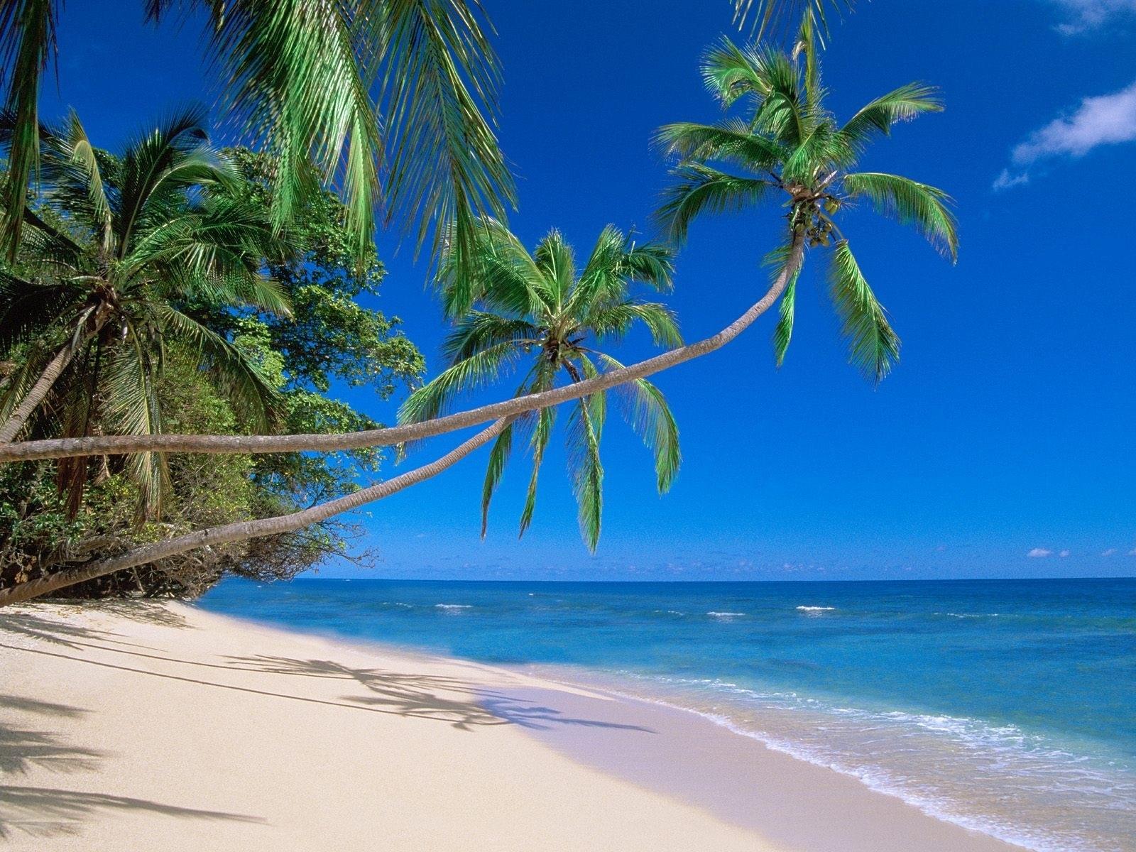 7647 Hintergrundbild herunterladen Strand, Landschaft, Sea, Palms - Bildschirmschoner und Bilder kostenlos