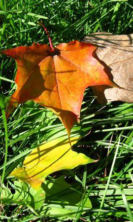 1354 скачать обои Растения, Трава, Листья - заставки и картинки бесплатно