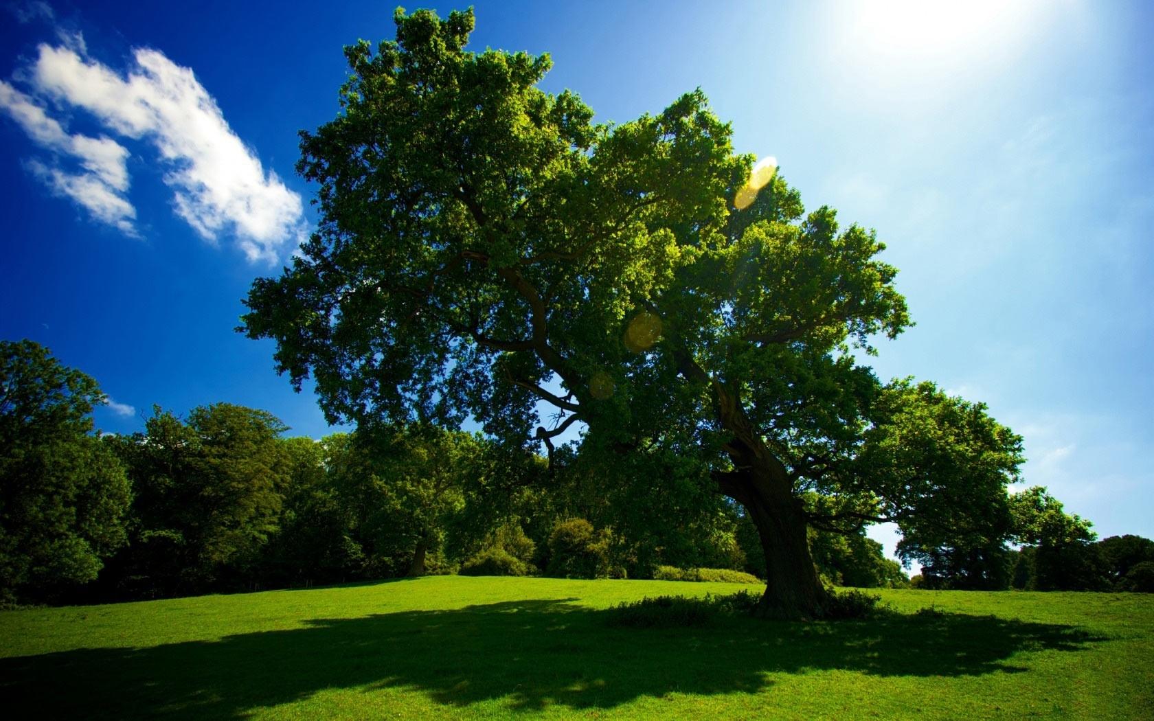 Handy-Wallpaper Landschaft, Natur, Bäume kostenlos herunterladen.