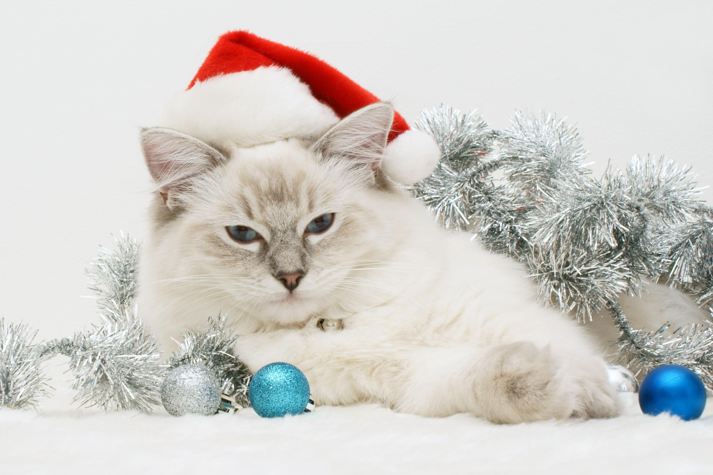 14088 скачать обои Праздники, Животные, Кошки (Коты, Котики), Новый Год (New Year), Рождество (Christmas, Xmas) - заставки и картинки бесплатно