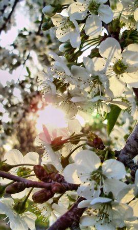 26028 télécharger le fond d'écran Plantes, Fleurs, Arbres - économiseurs d'écran et images gratuitement