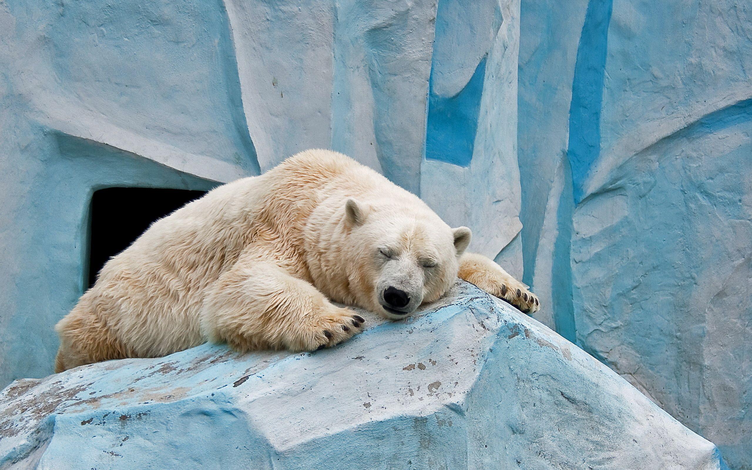 144930 скачать обои Животные, Белый Медведь, Лед, Лежать, Камни - заставки и картинки бесплатно