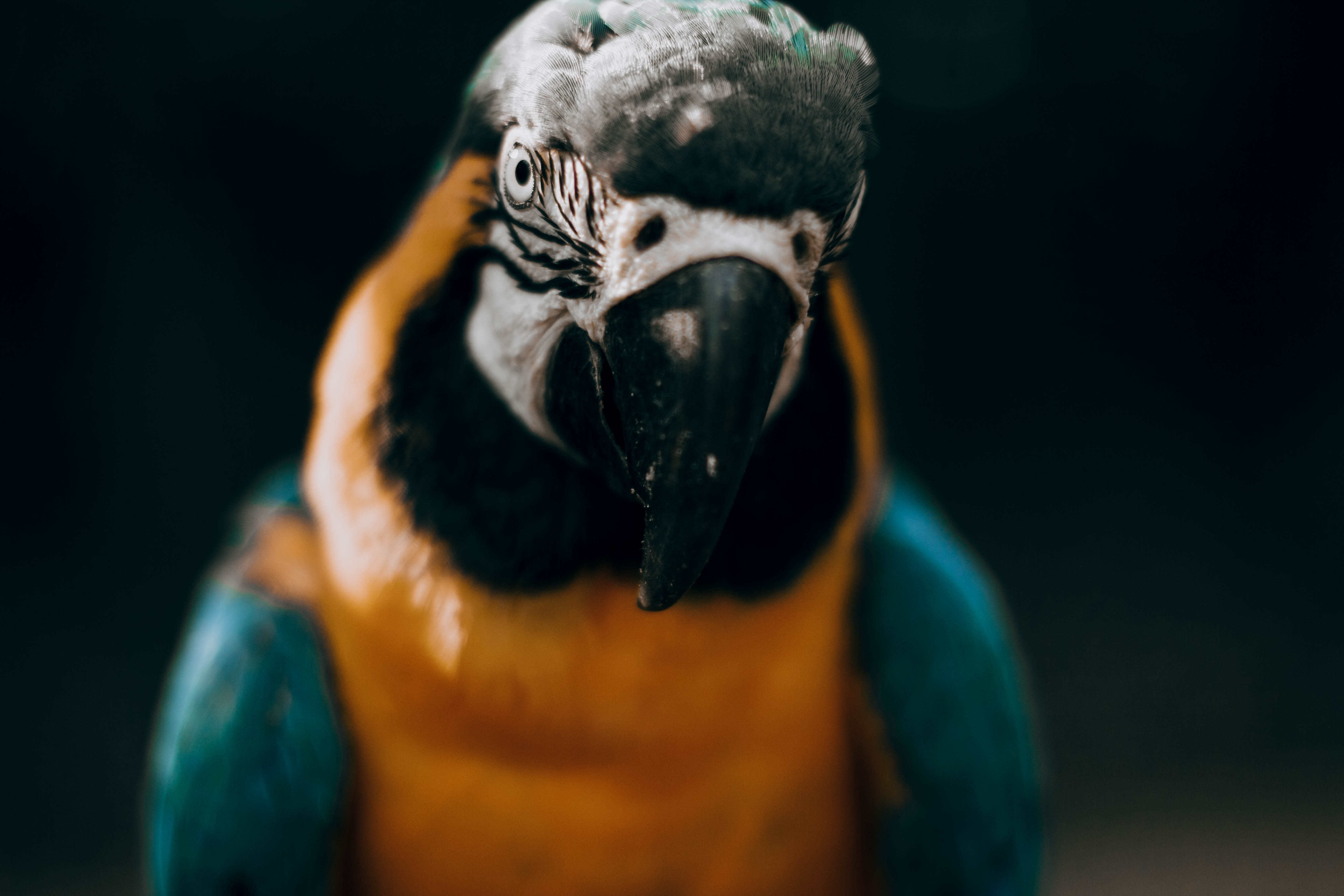 96848 download wallpaper Animals, Macaw, Parrots, Bird, Multicolored, Motley, Sight, Opinion screensavers and pictures for free