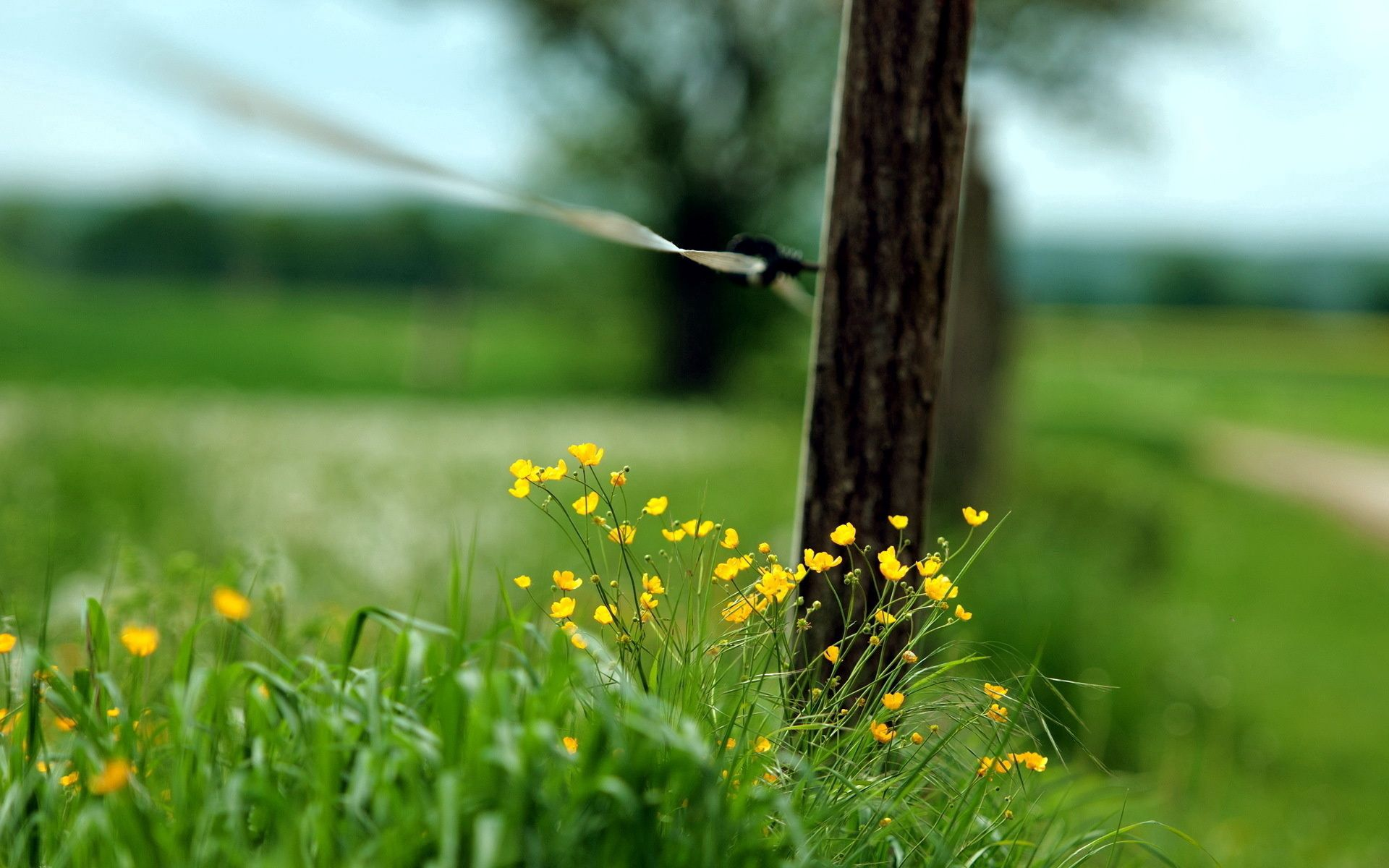 52618 Screensavers and Wallpapers Macro for phone. Download Grass, Macro, Fence pictures for free