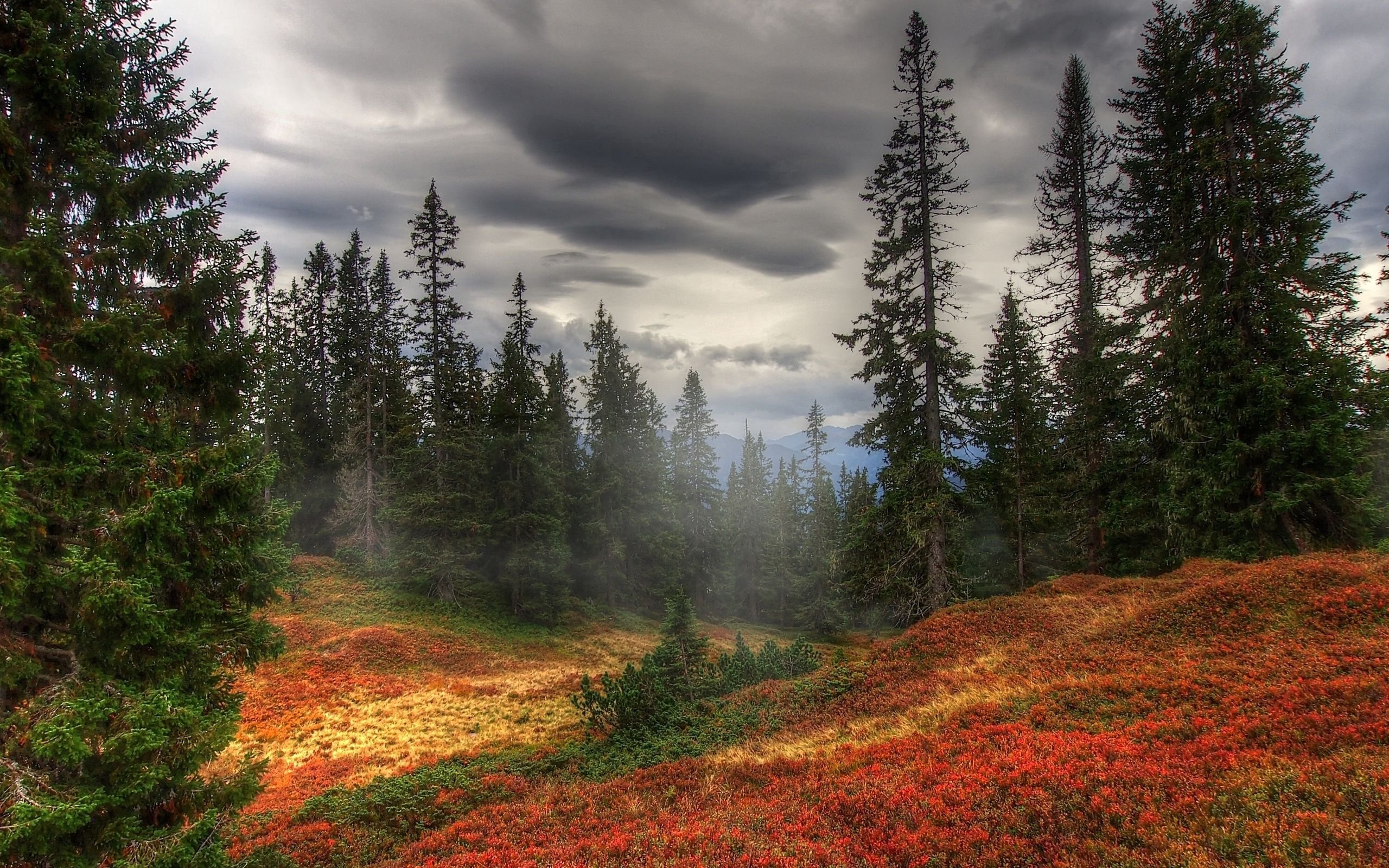 63946 download wallpaper Nature, Autumn, Fog, Trees, Forest screensavers and pictures for free