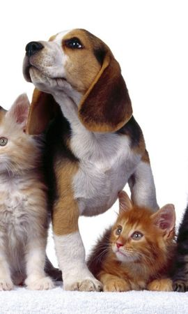 5884 download wallpaper Animals, Cats, Dogs screensavers and pictures for free