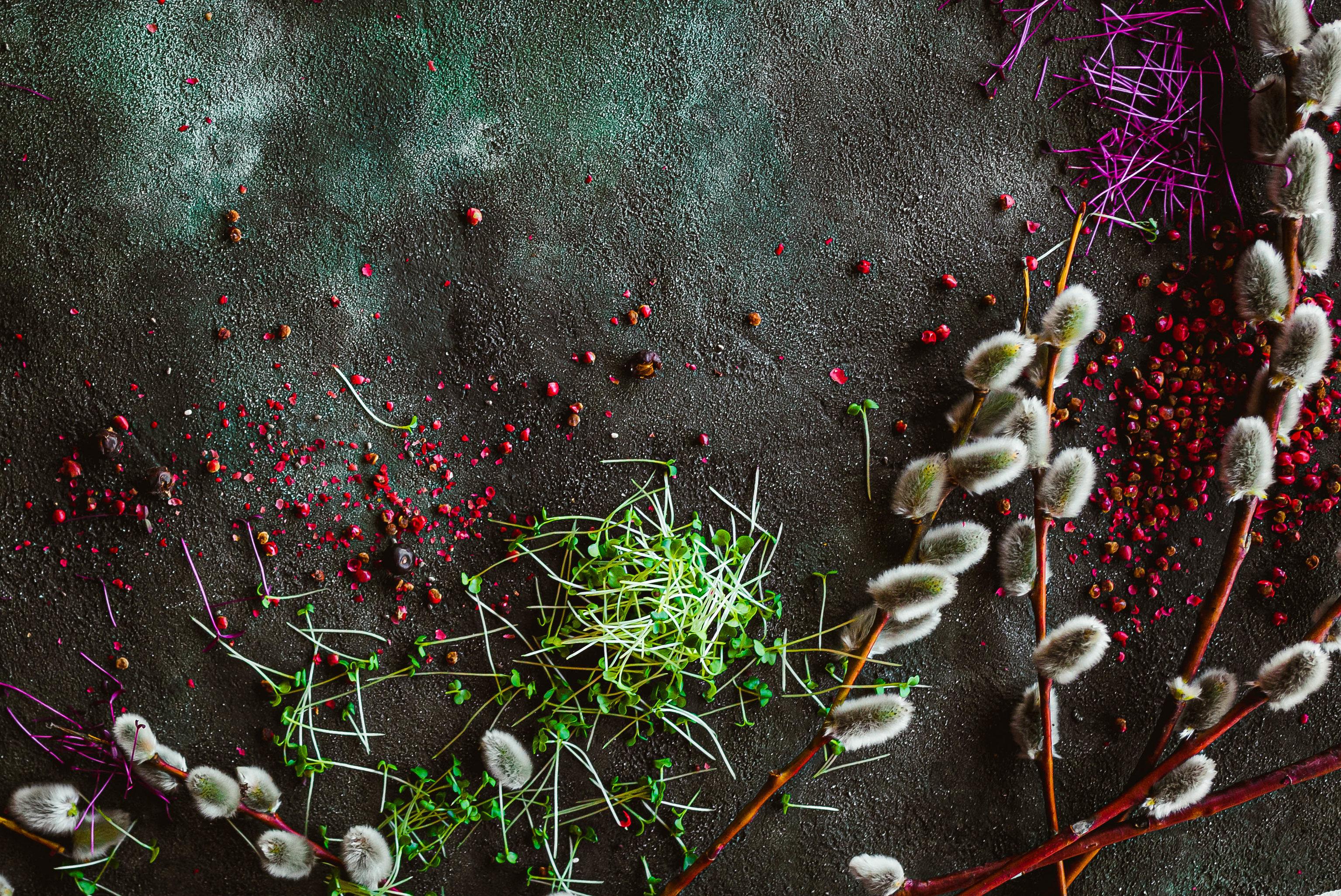 152569 скачать обои Разное, Верба, Растения, Специи, Текстура - заставки и картинки бесплатно