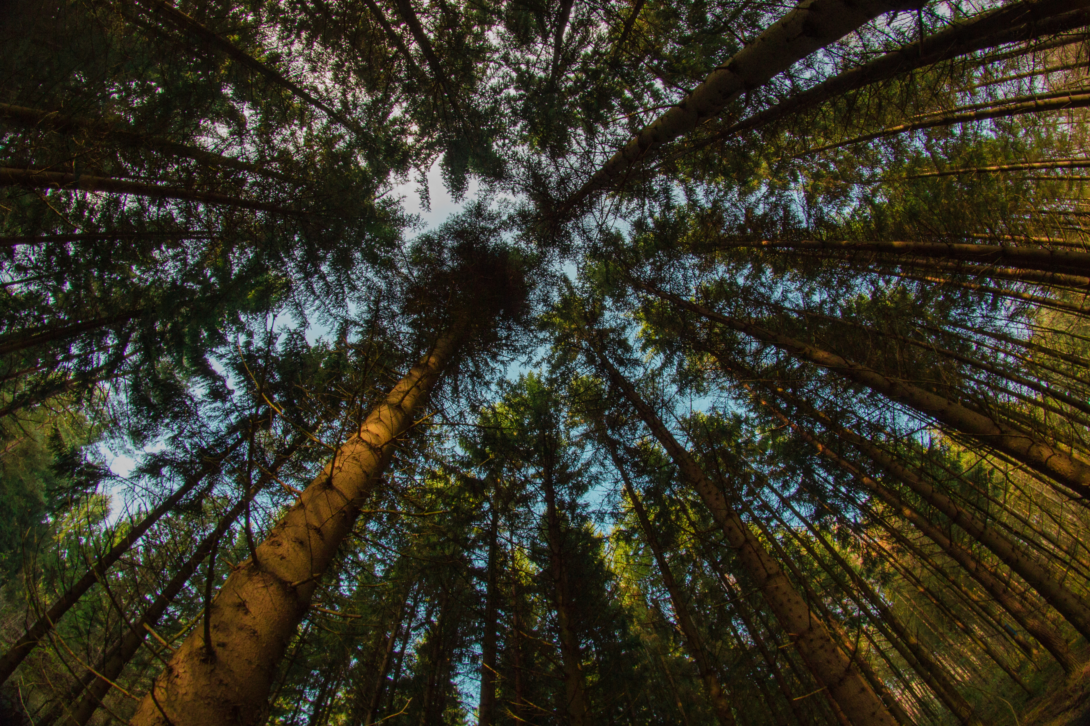 120468 download wallpaper Nature, Trees, Bottom View, Tops, Top, Branches screensavers and pictures for free