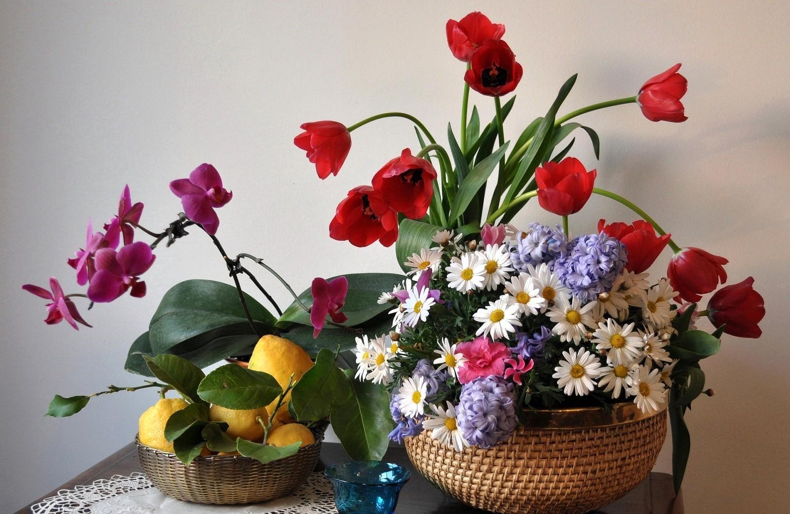 143109 скачать обои Тюльпаны, Ромашки, Цветы, Листья, Лимоны, Натюрморт, Орхидея, Гиацинты - заставки и картинки бесплатно