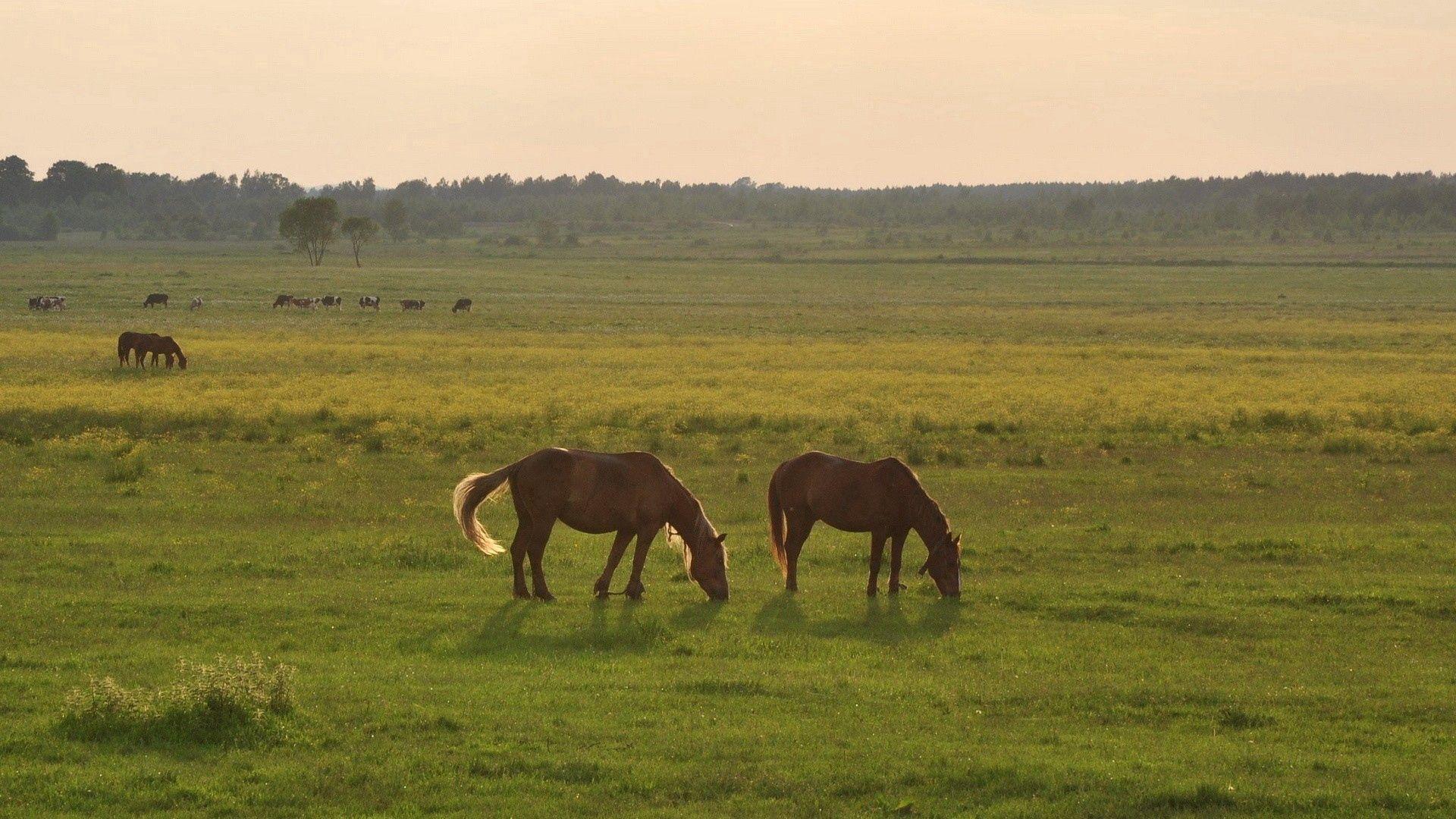 104154 скачать обои Животные, Лошади, Трава, Небо - заставки и картинки бесплатно