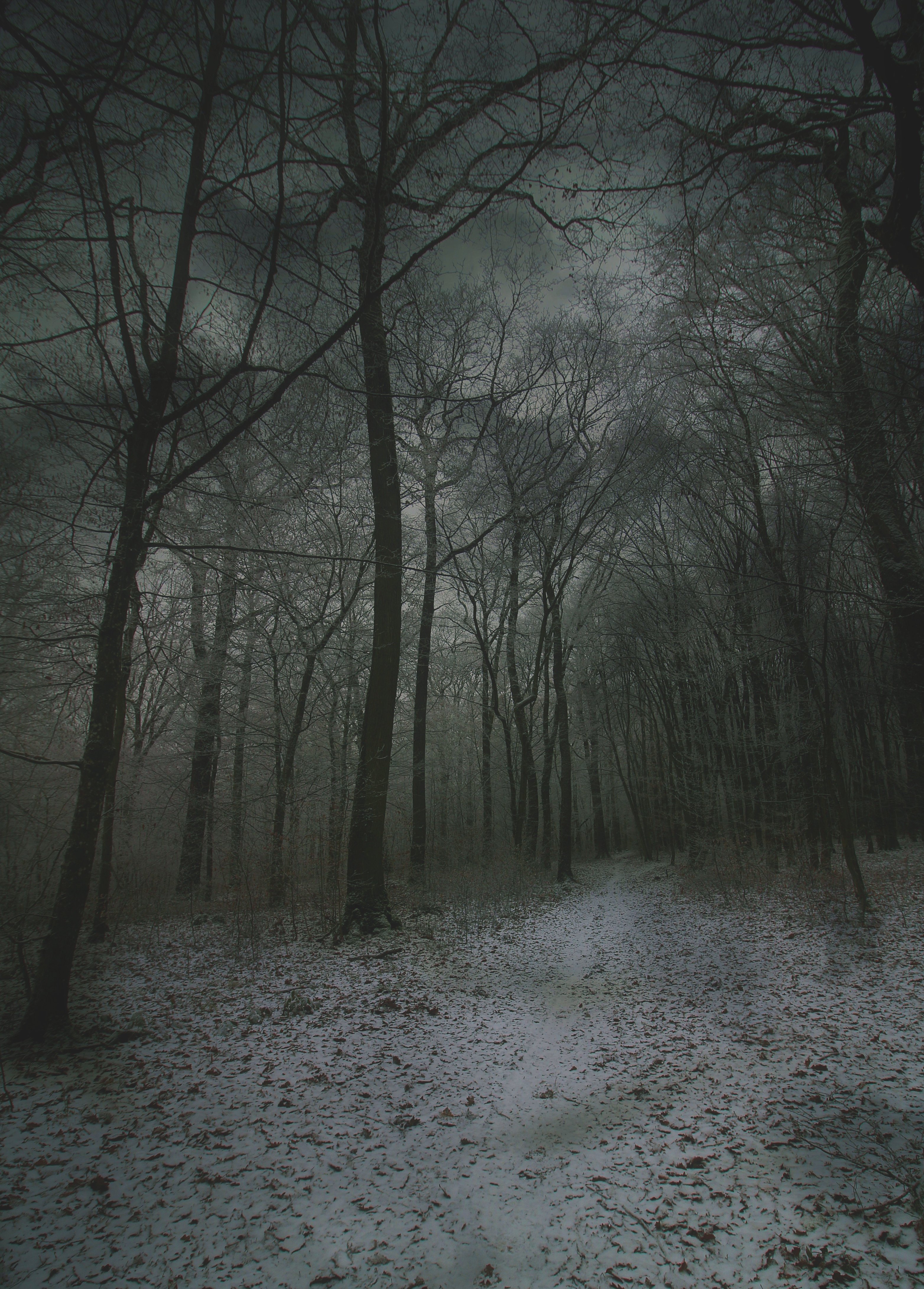 59393 download wallpaper Winter, Nature, Autumn, Snow, Forest, Fog, Path screensavers and pictures for free