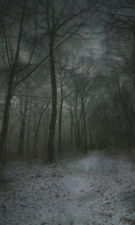 59393 скачать обои Природа, Туман, Лес, Тропинка, Снег, Осень, Зима - заставки и картинки бесплатно