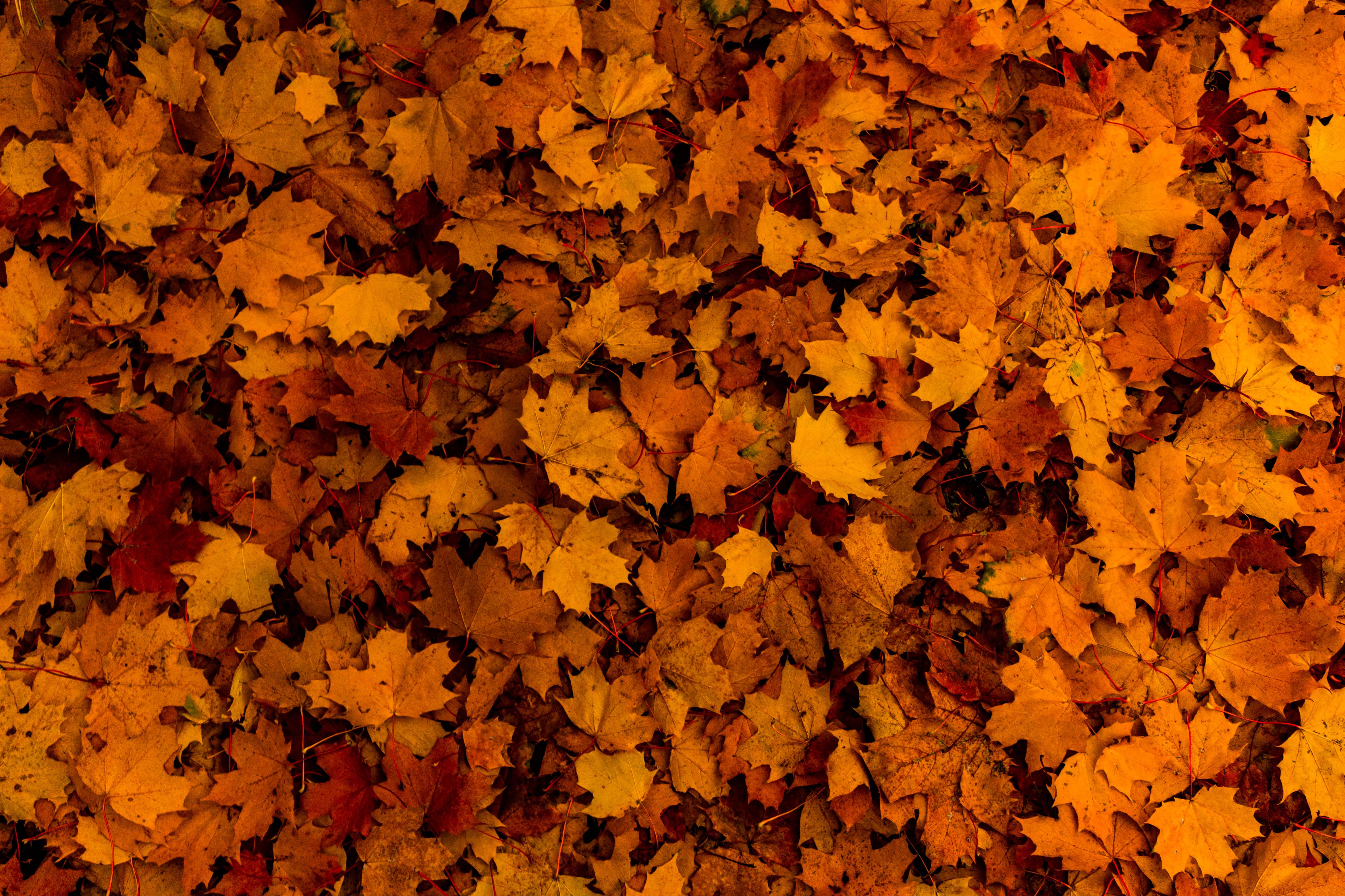121498 Lade kostenlos Gelb Hintergrundbilder für dein Handy herunter, Natur, Herbst, Blätter Gelb Bilder und Bildschirmschoner für dein Handy