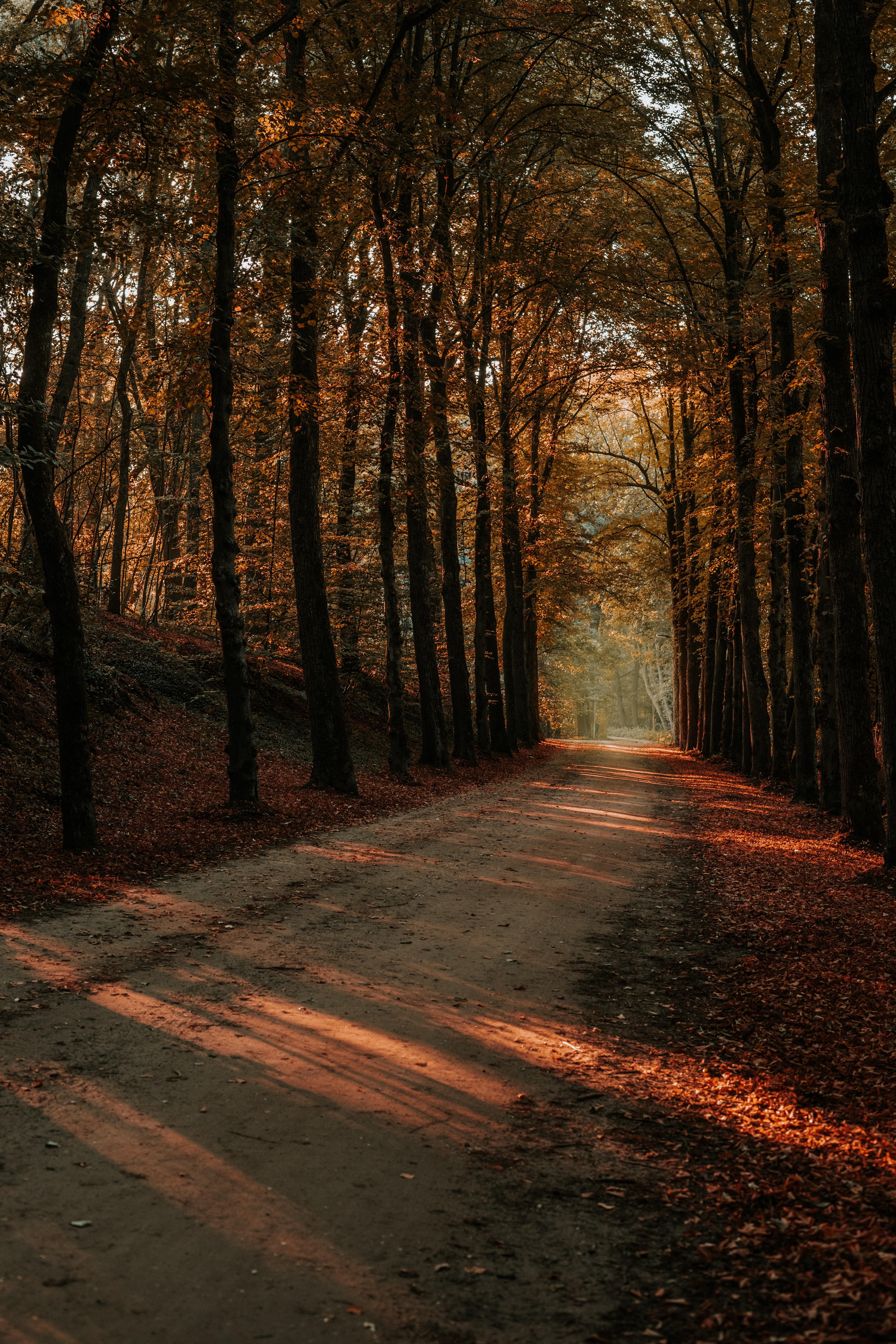53471壁紙のダウンロード自然, 路地, 裏通り, 木, 秋, 道路, 道, ビーム, 光線-スクリーンセーバーと写真を無料で