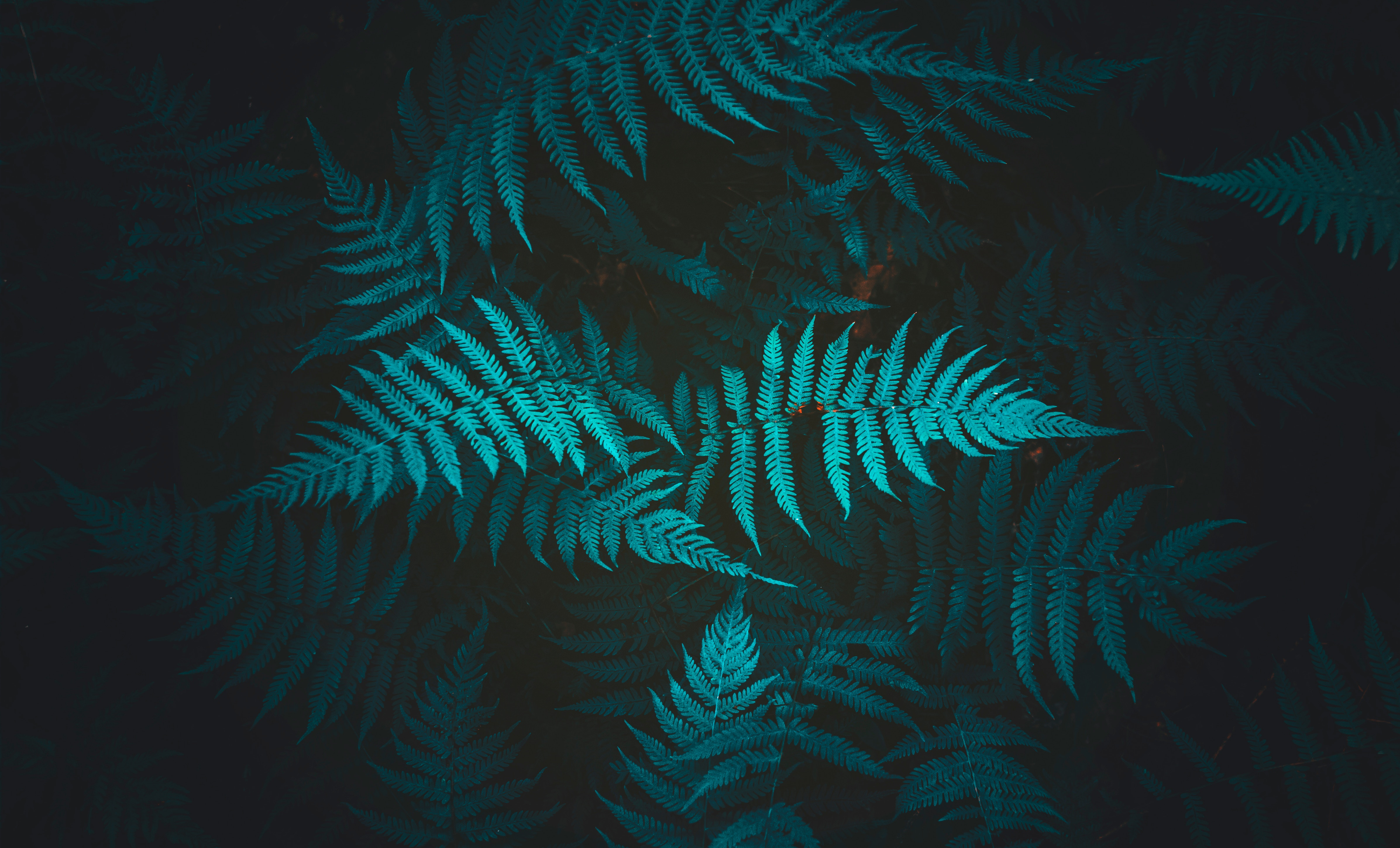 85028 Screensavers and Wallpapers Foliage for phone. Download Nature, Plant, Fern, Foliage pictures for free