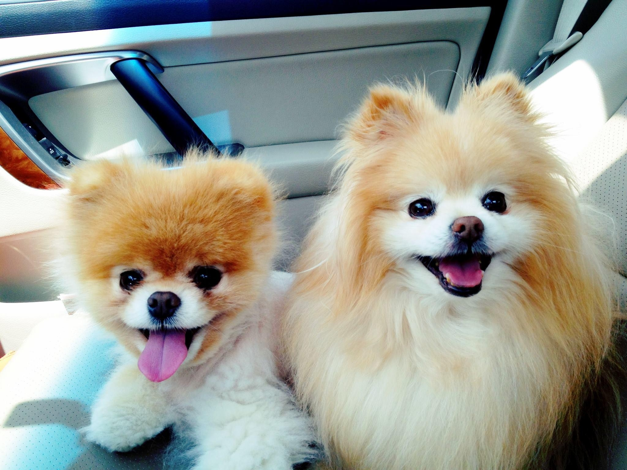 85017 download wallpaper Animals, Dogs, Car, Beautiful screensavers and pictures for free