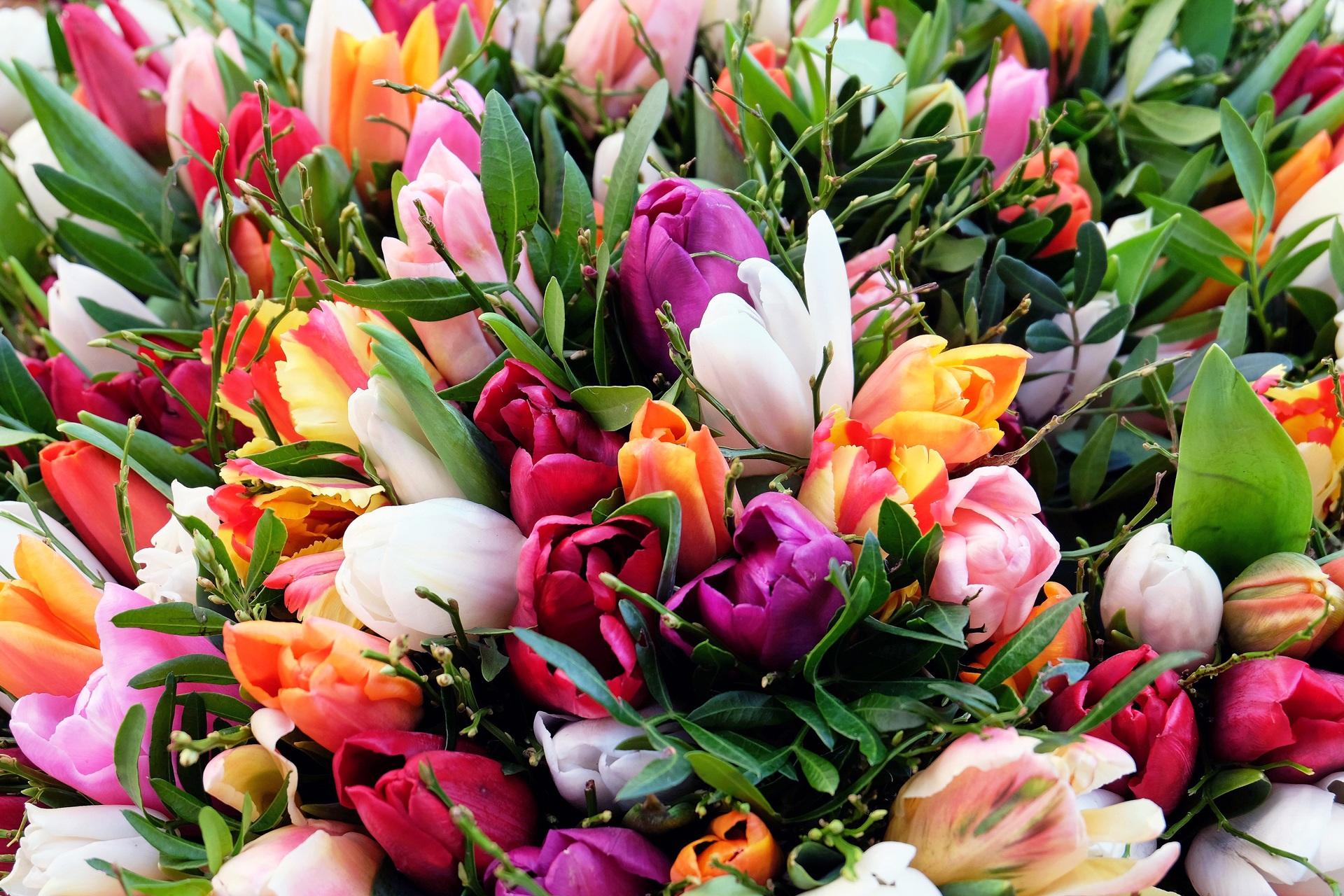107970 скачать обои Цветы, Букет, Тюльпаны - заставки и картинки бесплатно