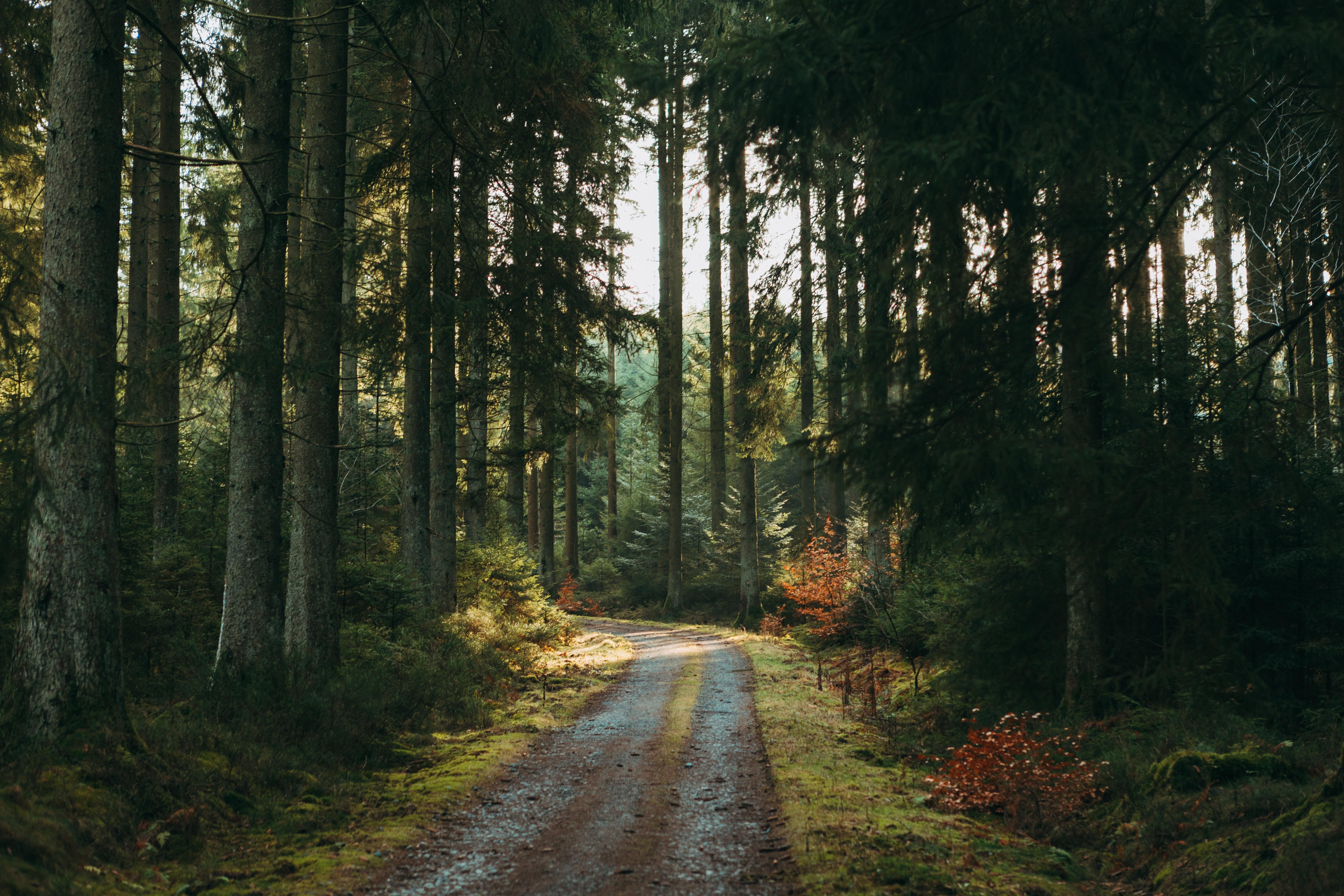 74406 скачать обои Лес, Дорога, Деревья, Природа, Сосны - заставки и картинки бесплатно