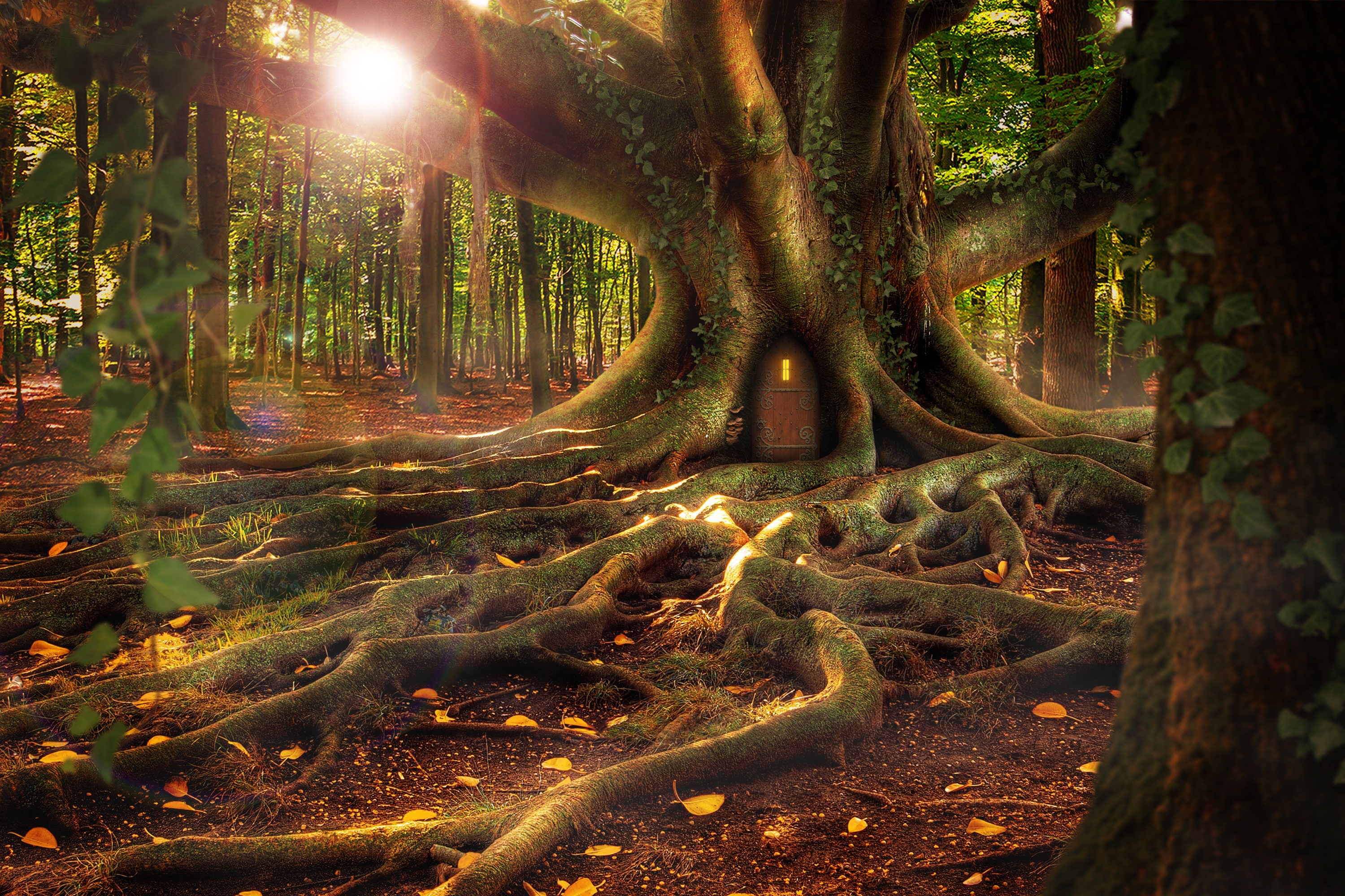88679 download wallpaper Fantasy, Small House, Lodge, Forest, Wood, Tree, Roots screensavers and pictures for free