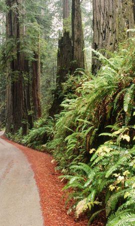 39850 скачать обои Пейзаж, Деревья, Дороги - заставки и картинки бесплатно