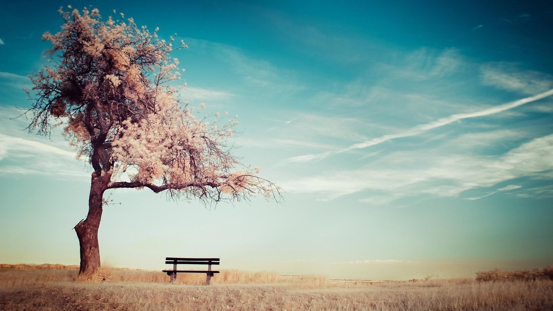 Скачать картинку Пейзаж, Деревья, Небо в телефон бесплатно.