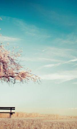 22082 скачать обои Пейзаж, Деревья, Небо - заставки и картинки бесплатно