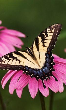 45289 Salvapantallas y fondos de pantalla Insectos en tu teléfono. Descarga imágenes de Mariposas, Insectos gratis