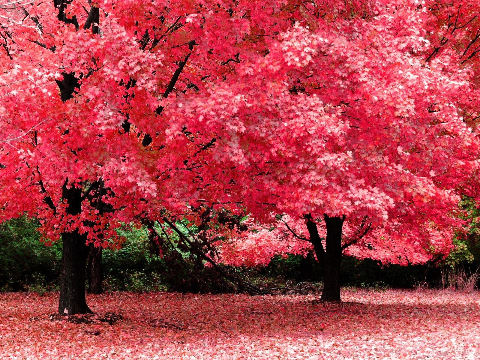 7242 скачать обои Пейзаж, Деревья, Осень - заставки и картинки бесплатно
