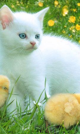 220 скачать обои Животные, Кошки (Коты, Котики), Птицы, Трава, Цыплята - заставки и картинки бесплатно