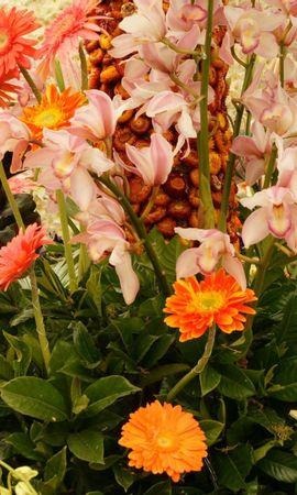 60738 скачать обои Цветы, Поляна, Растения, Яркий - заставки и картинки бесплатно