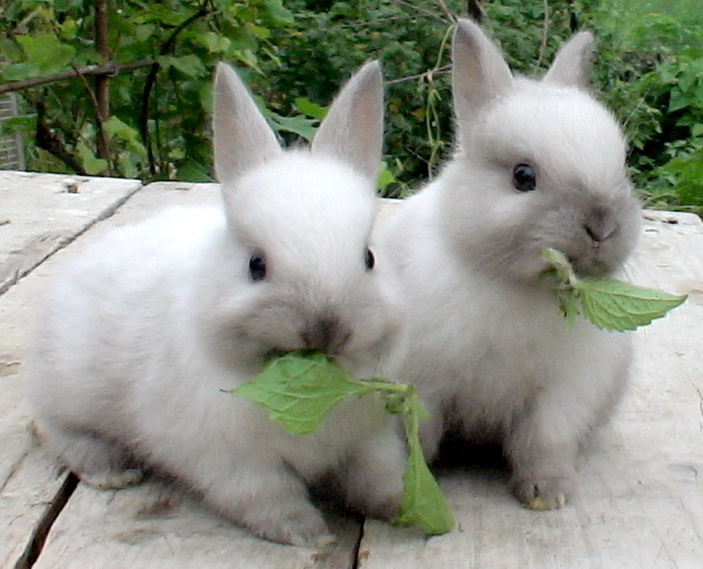 Download mobile wallpaper Animals, Rabbits for free.