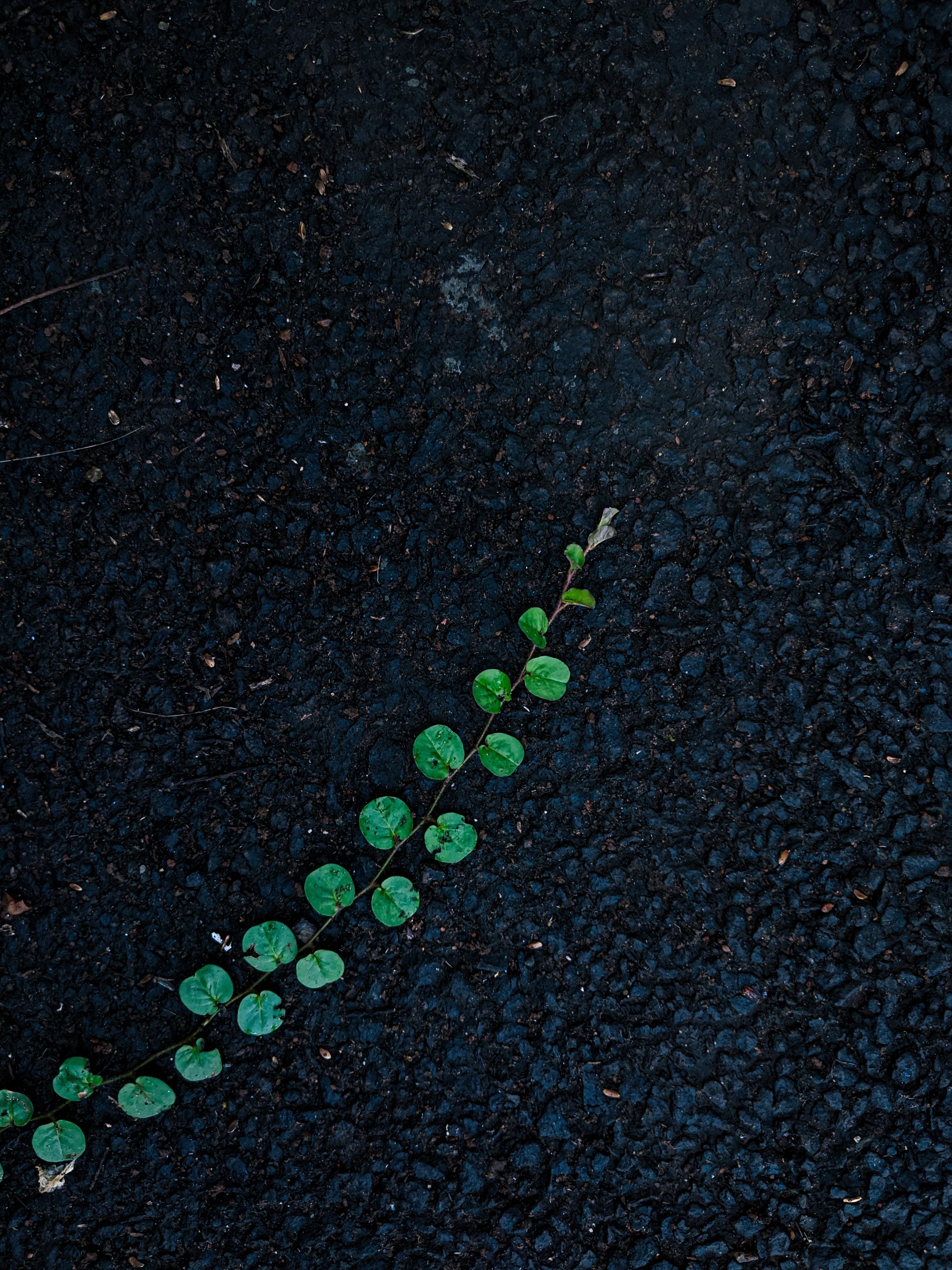 137680 Protetores de tela e papéis de parede Miscelânea em seu telefone. Baixe Miscelânea, Plantar, Planta, Variado, Asfalto, Covil, Loach, Hera fotos gratuitamente