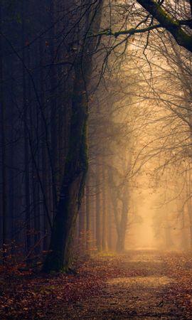 95669 скачать обои Природа, Парк, Осень, Деревья - заставки и картинки бесплатно