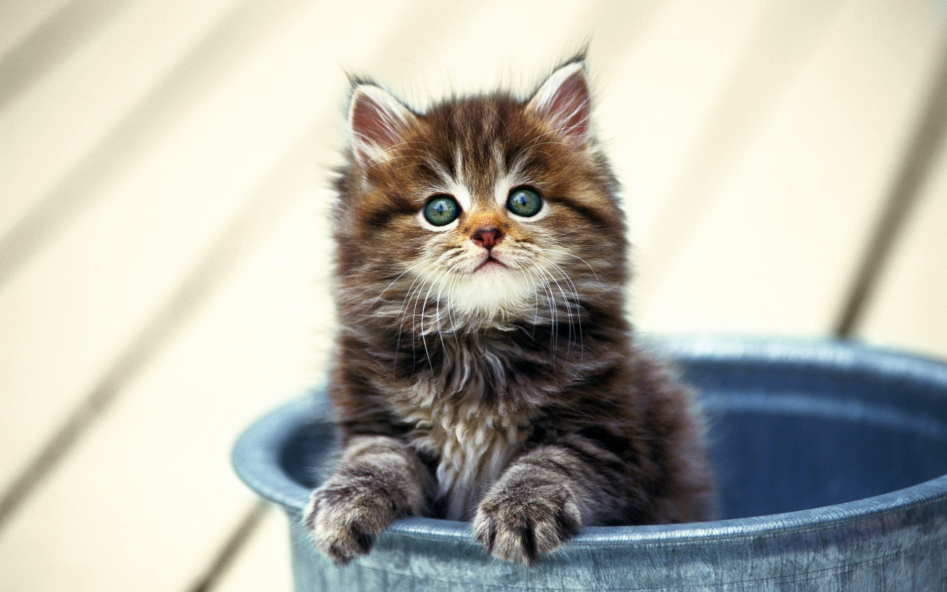 48839 скачать обои Кошки (Коты, Котики), Животные - заставки и картинки бесплатно