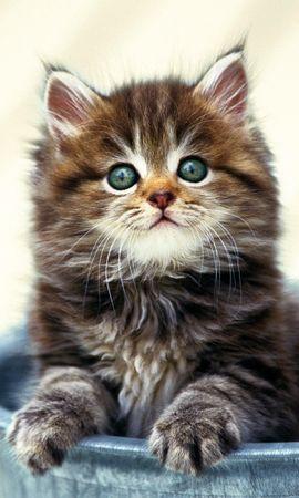 48839 скачать обои Животные, Кошки (Коты, Котики) - заставки и картинки бесплатно
