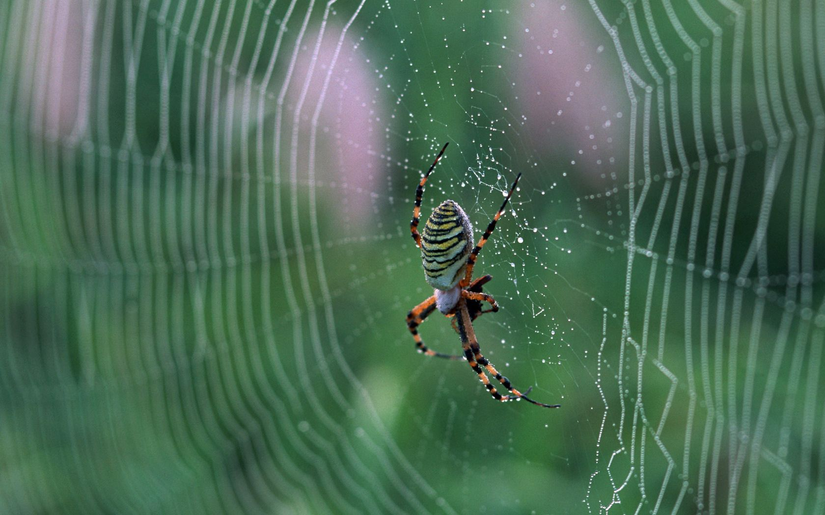 112922 download wallpaper Macro, Web, Spider, Drops screensavers and pictures for free